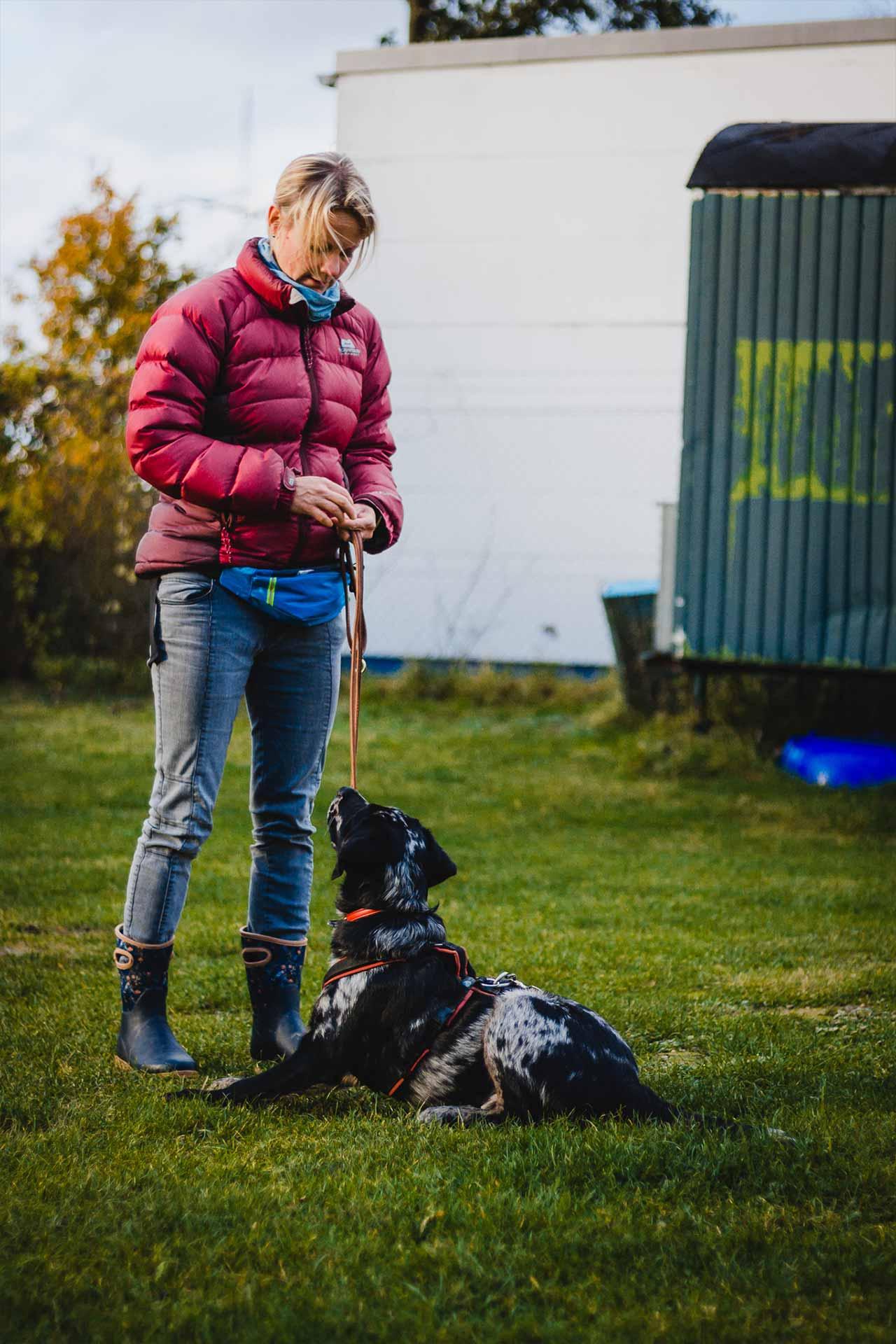 hundpunkt_hundeschule_muenster-einzelcoaching-analysegespraech-1