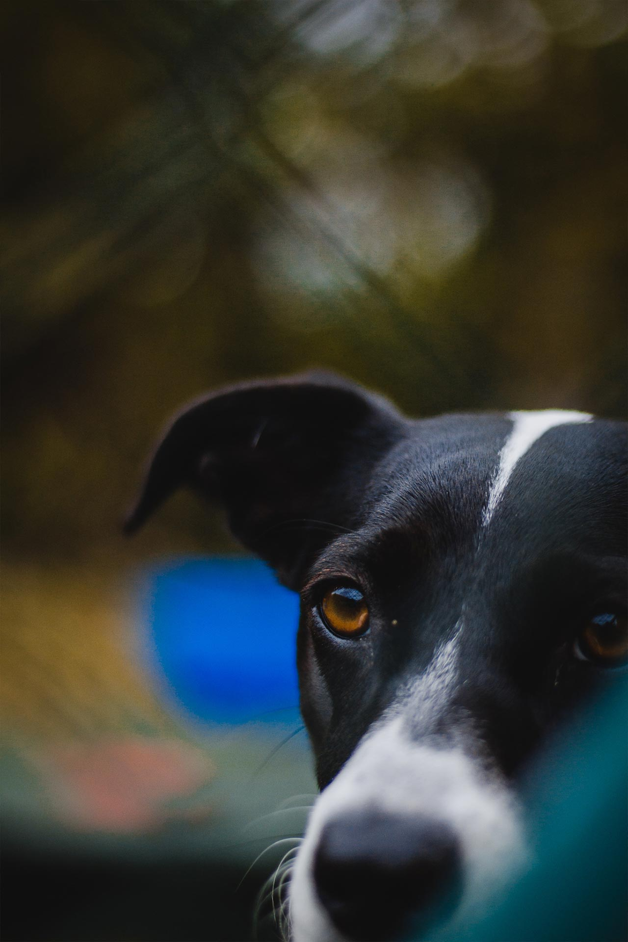 hundpunkt_hundeschule_muenster-einzelcoaching-hundeportrait
