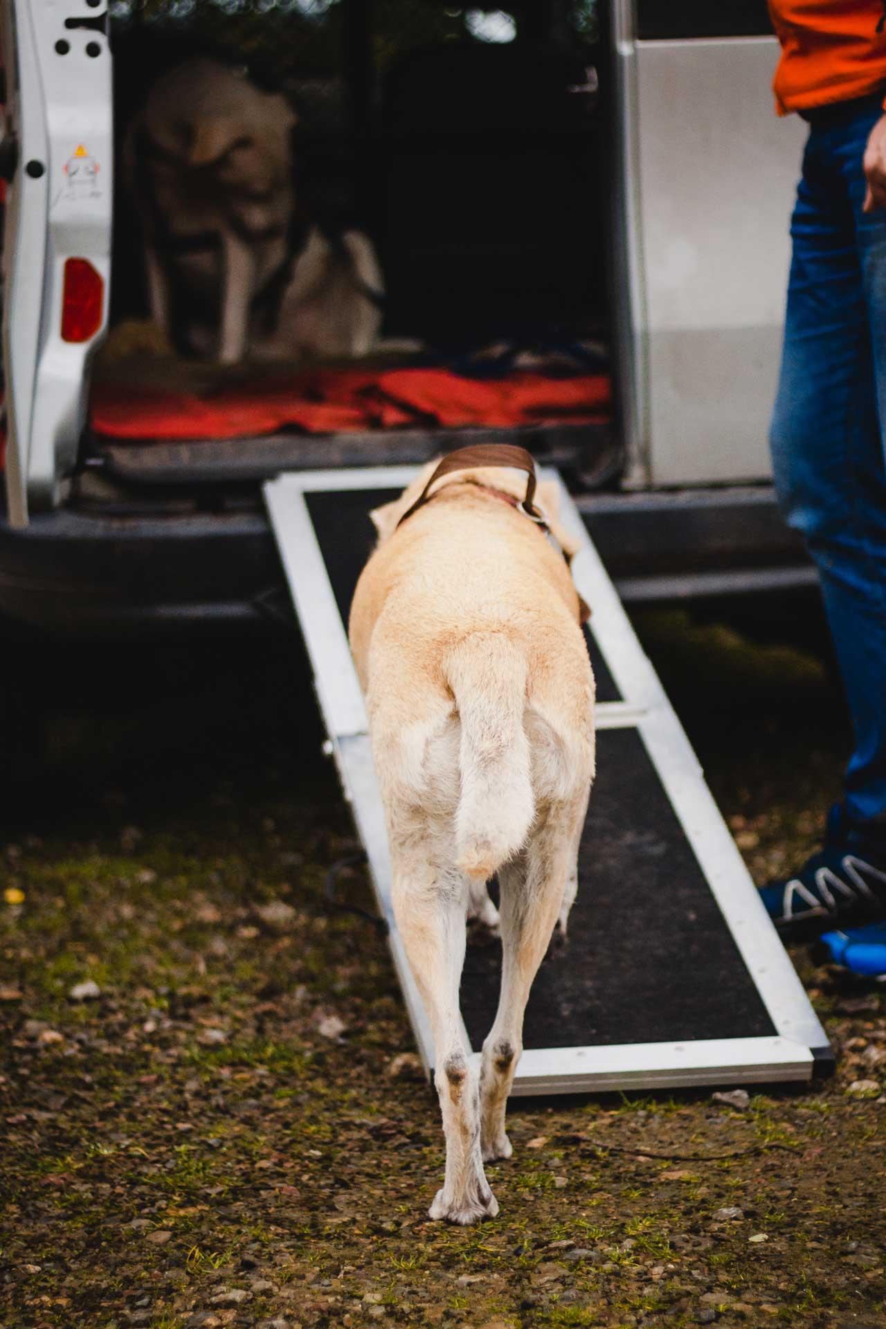 hundpunkt_hundeschule_muenster-einzelcoaching-tierarzttraining-autofahren
