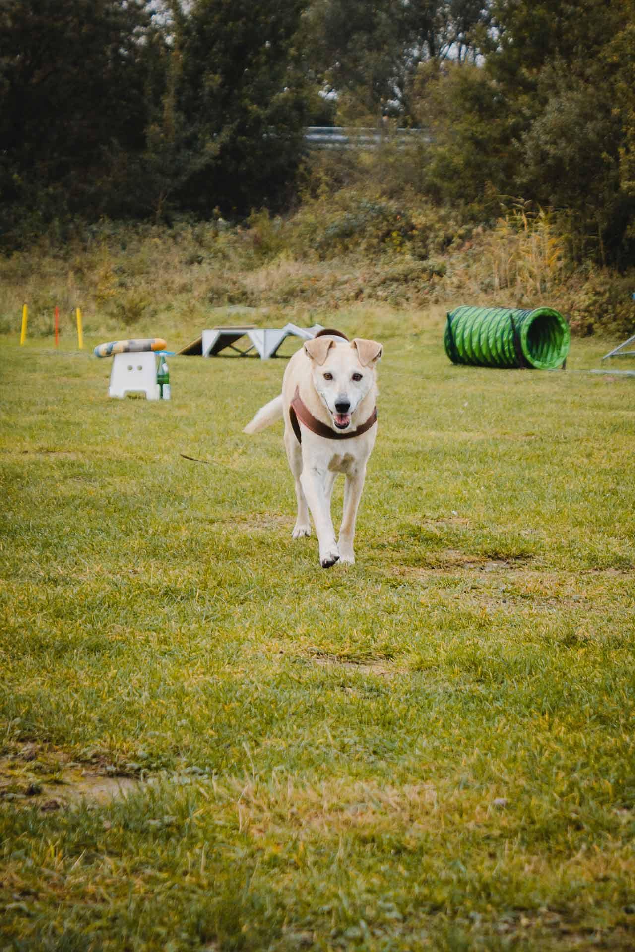 hundpunkt_hundeschule_muenster-gruppentraining