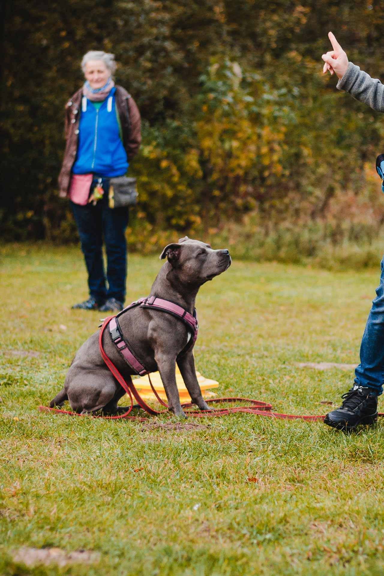 hundpunkt_hundeschule_muenster-ibbenbueren-einzeltraining