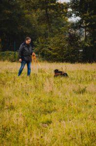 hundpunkt_hundeschule_muenster-ibbenbueren-fahrenworkshop