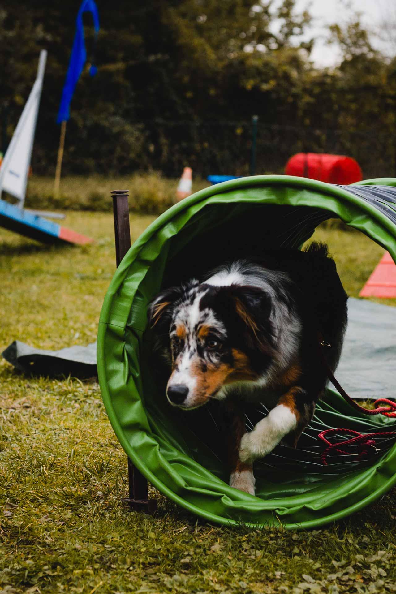 hundpunkt_hundeschule_muenster-kurs-agility-hundesport-2