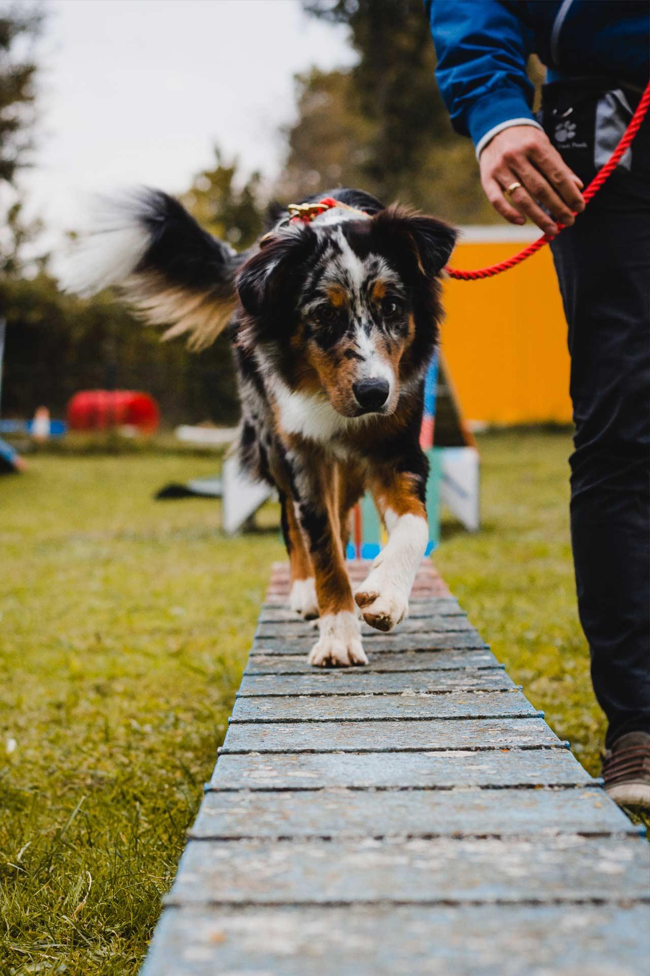 hundpunkt_hundeschule_muenster-kurs-agility-hundesport-3