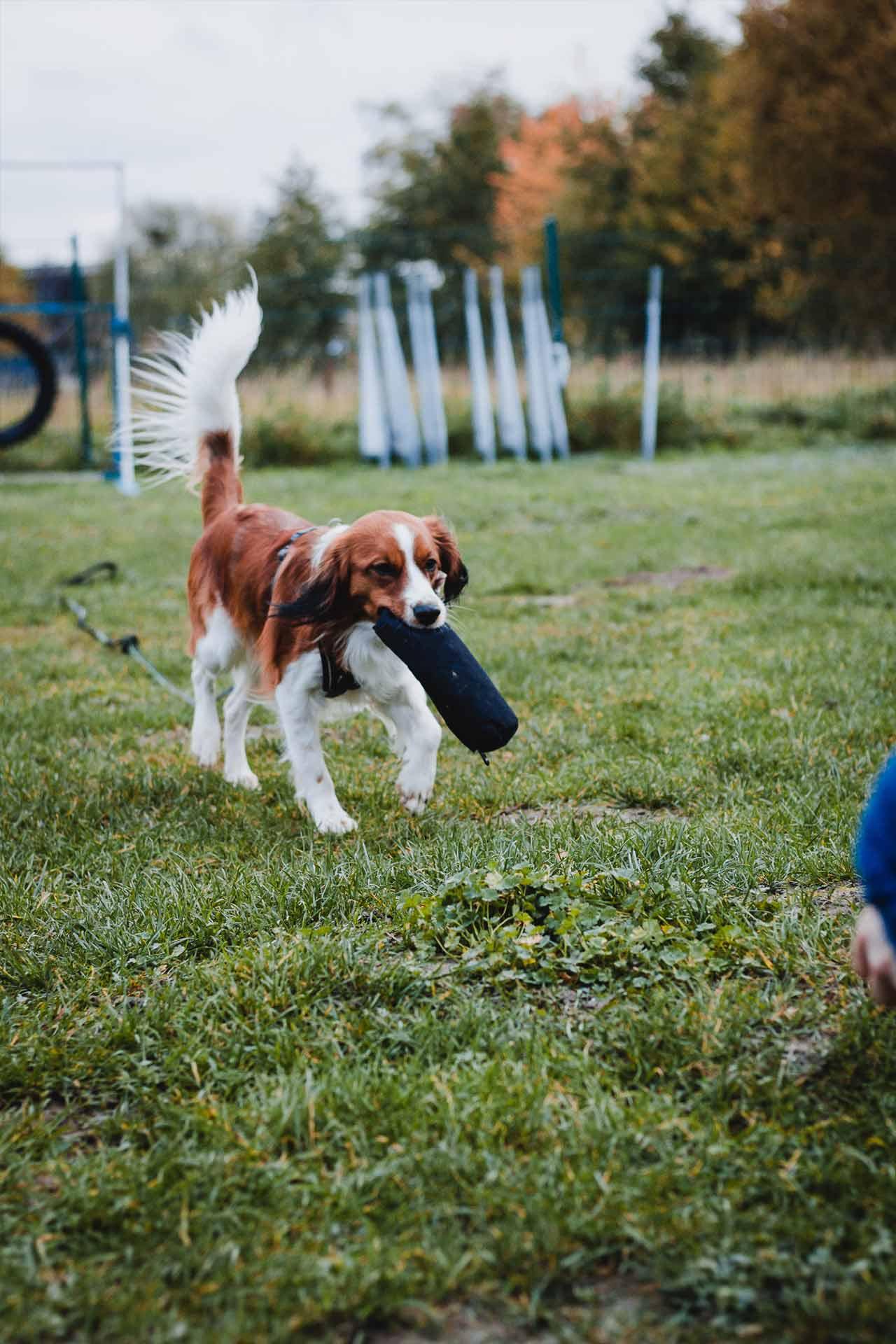 hundpunkt_hundeschule_muenster-kurs-apportieren-1