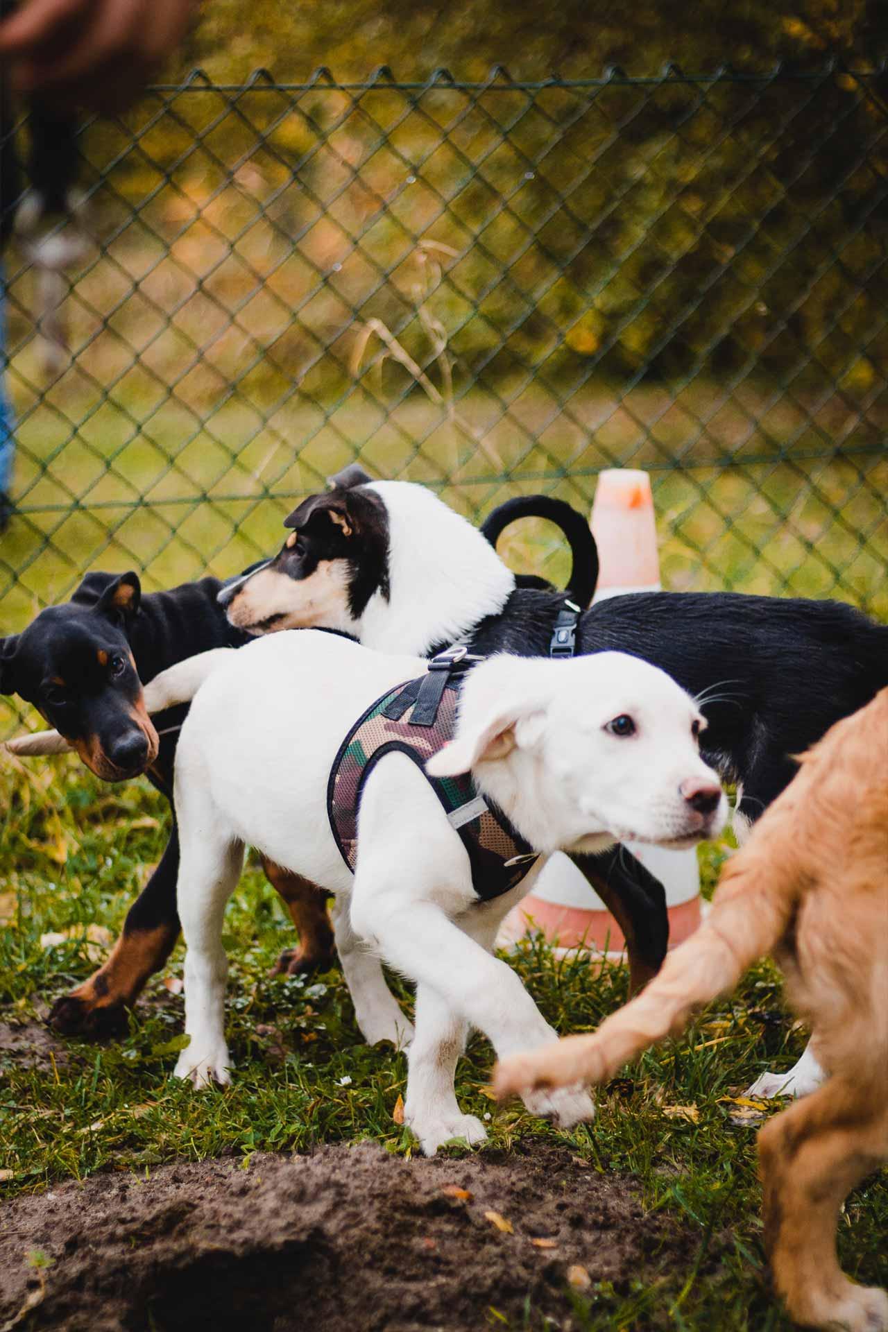 hundpunkt_hundeschule_muenster-kurs-gruppentraining-1