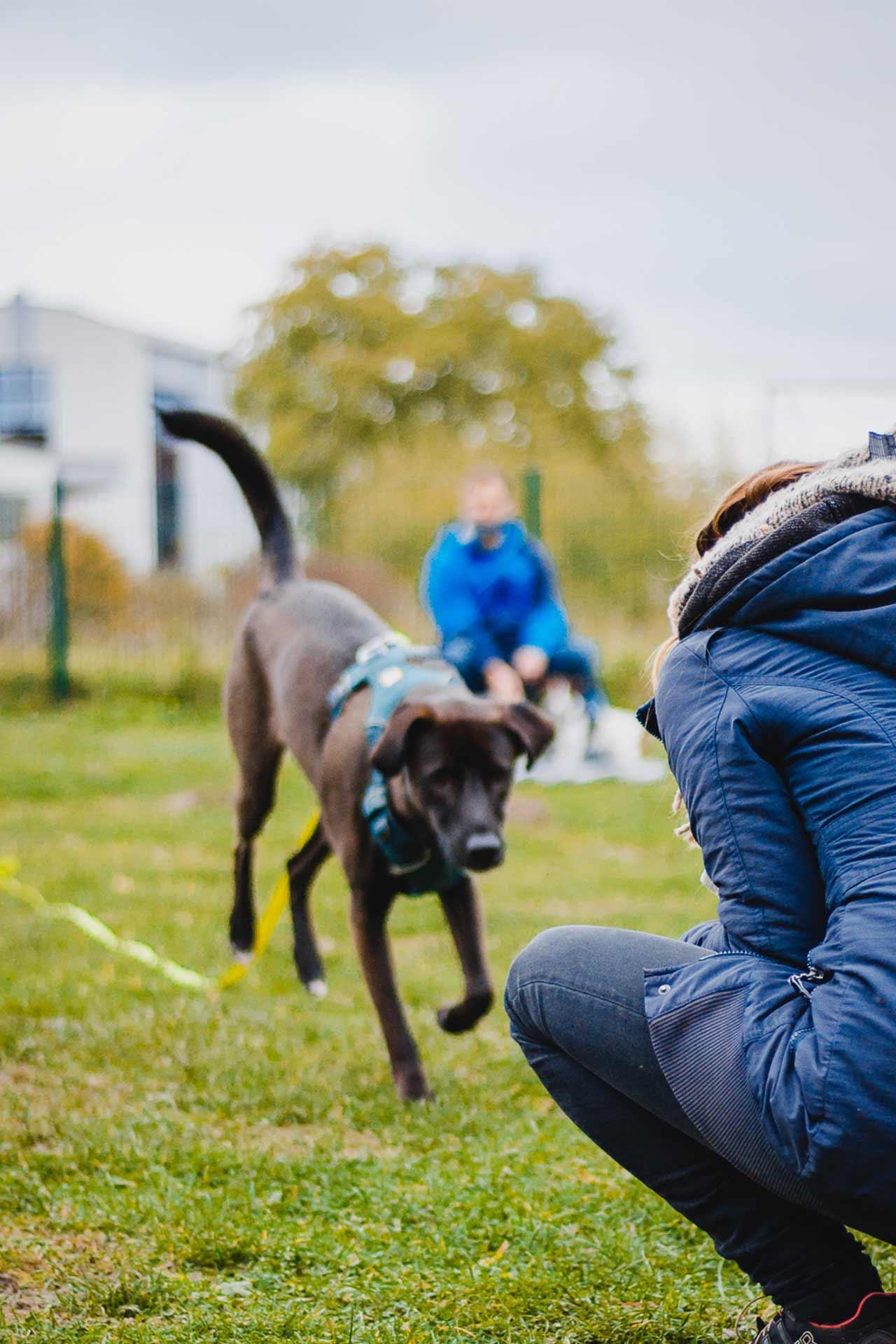 hundpunkt_hundeschule_muenster-kurs-rueckruf-seminar-3