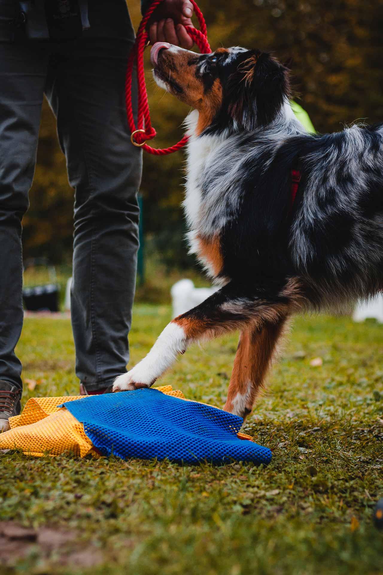 hundpunkt_hundeschule_muenster-kurs-trickklickgymnastik-2