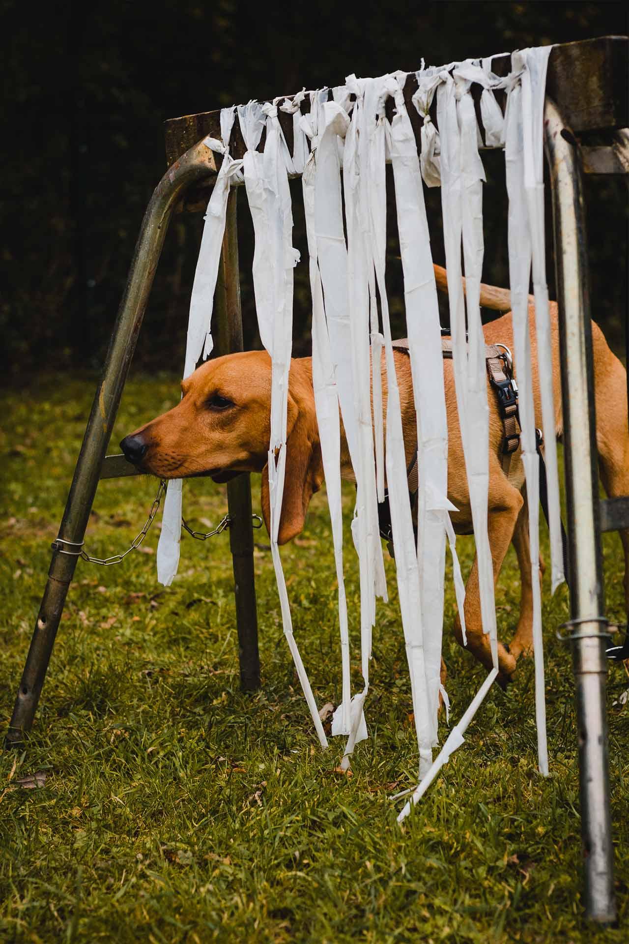 hundpunkt_hundeschule_muenster-kurse-allezhoop