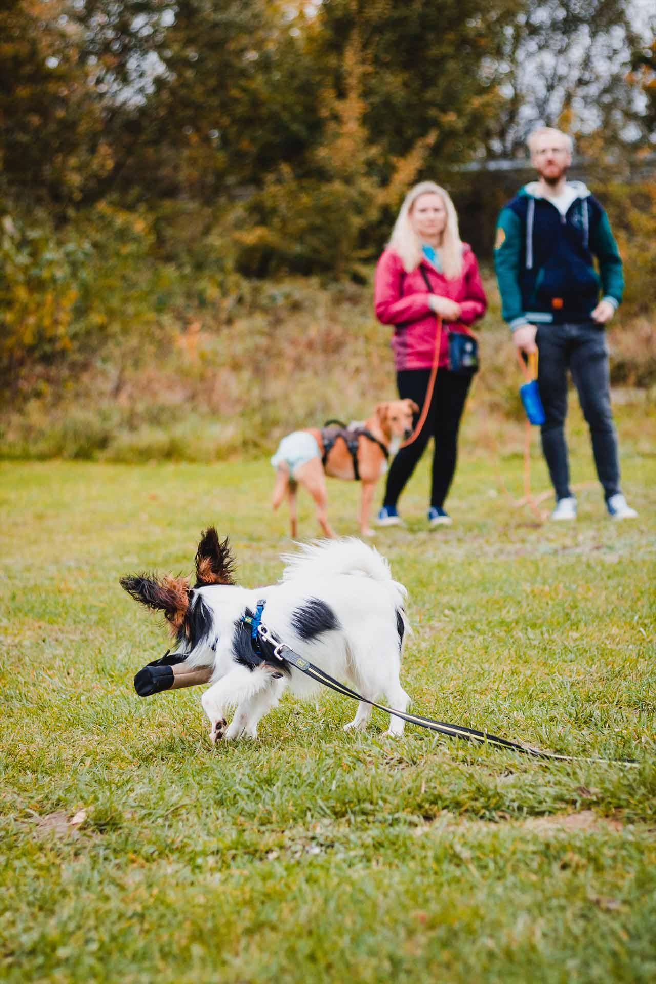 hundpunkt_hundeschule_muenster-kurse-bienchenbluemchen-1