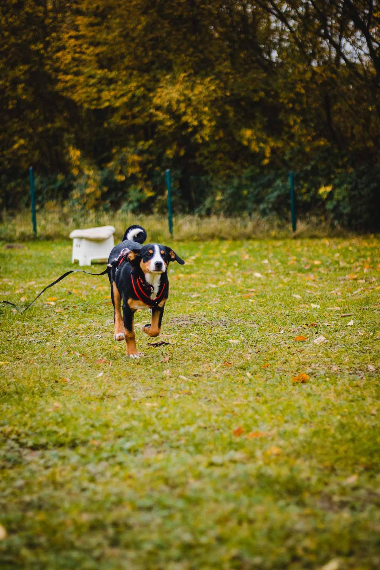 hundpunkt_hundeschule_muenster-kurse-longiren-2