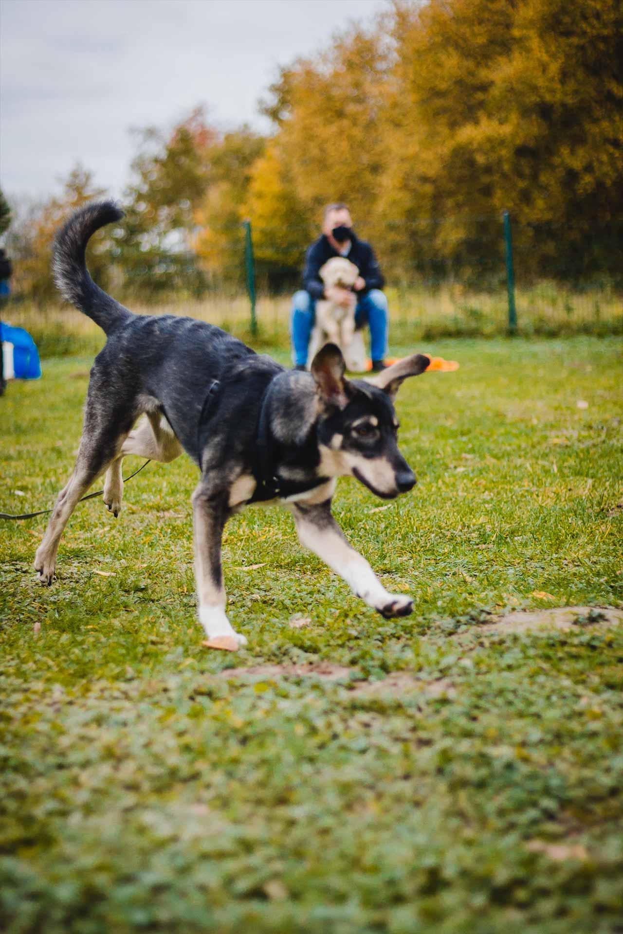 hundpunkt_hundeschule_muenster-kurse-longiren-3