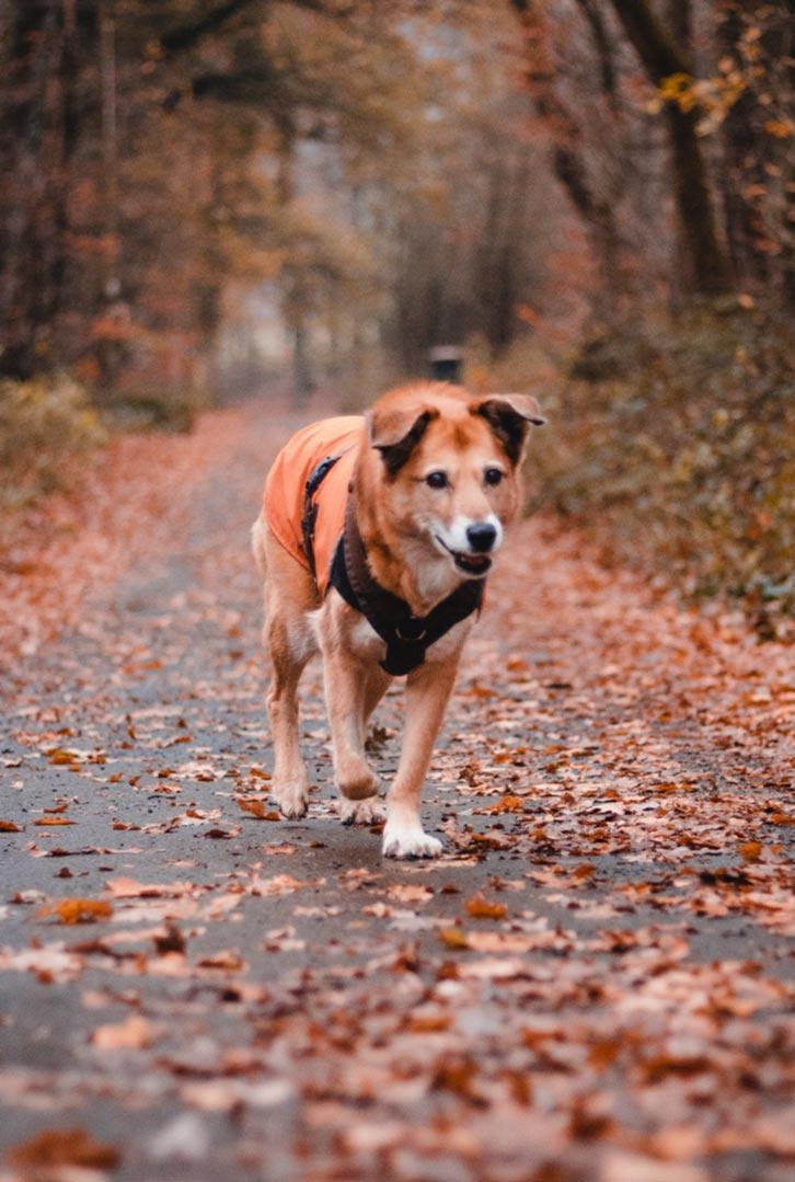 hundpunkt_hundeschule_muenster-merrychristmas