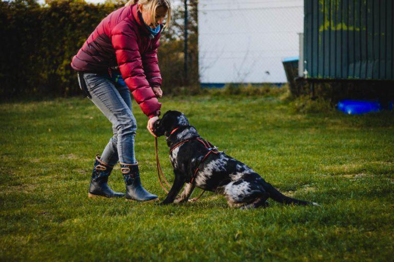 hundpunkt_hundeschule_muenster-trainingswiese-hiltrup-4