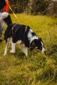 hundpunkt_hundeschule_muenster_blogartikel_faehrtensuche-6