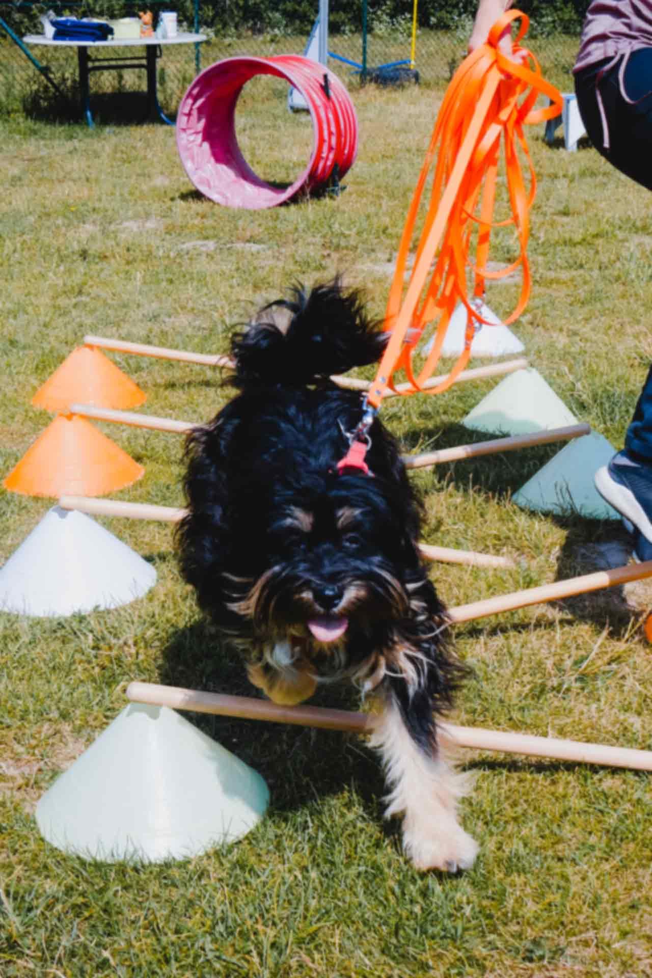 hundpunkt_hundeschule_muenster-ibbenbueren-allerlei-training