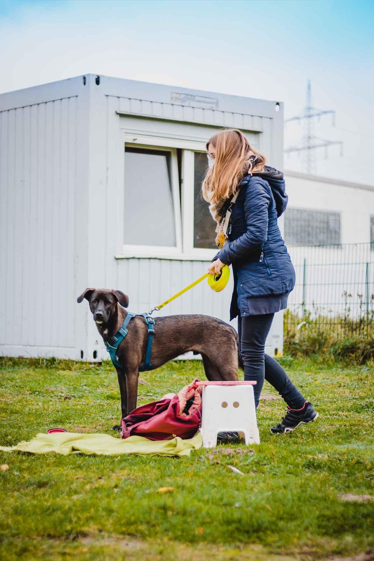 hundpunkt_hundeschule_muenster-ibbenbueren-einzelcoaching