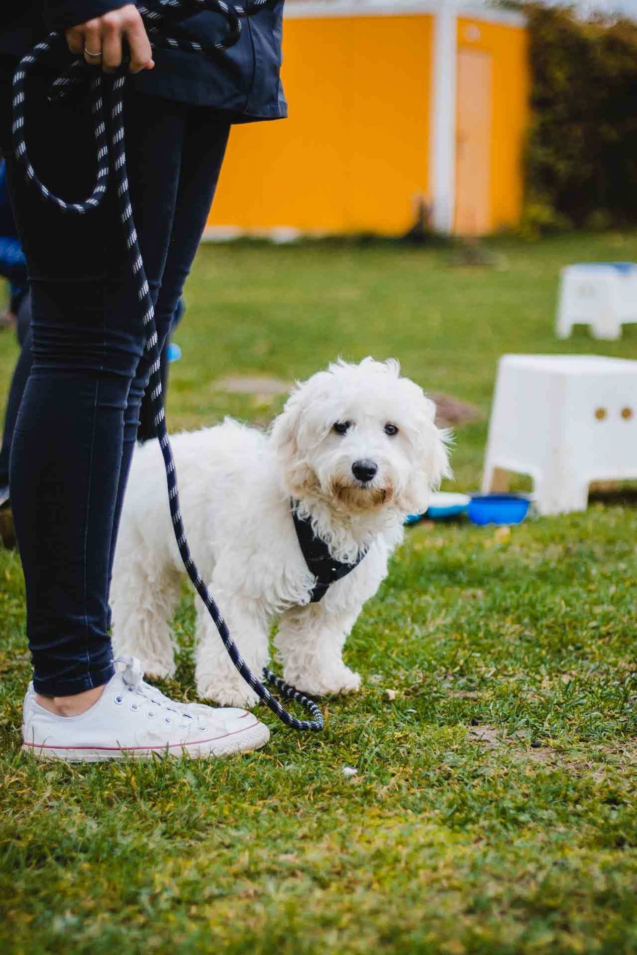 hundpunkt_hundeschule_muenster-ibbenbueren-einzeltraining-malteser