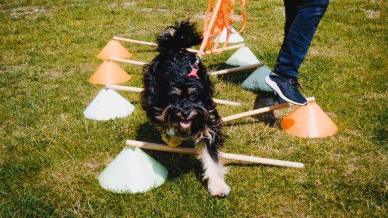 hundpunkt_hundeschule_muenster-ibbenbueren-hoopers-agility-parcours