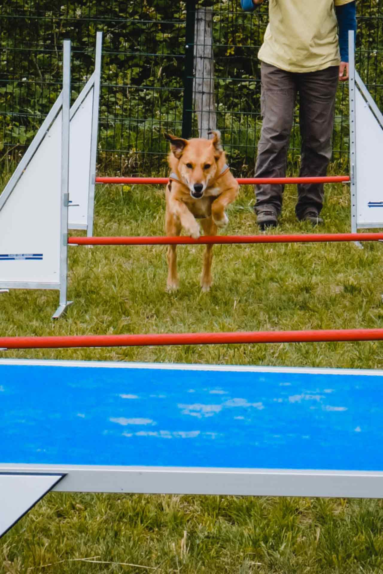 hundpunkt_hundeschule_muenster-ibbenbueren-kurs-agility-aktion