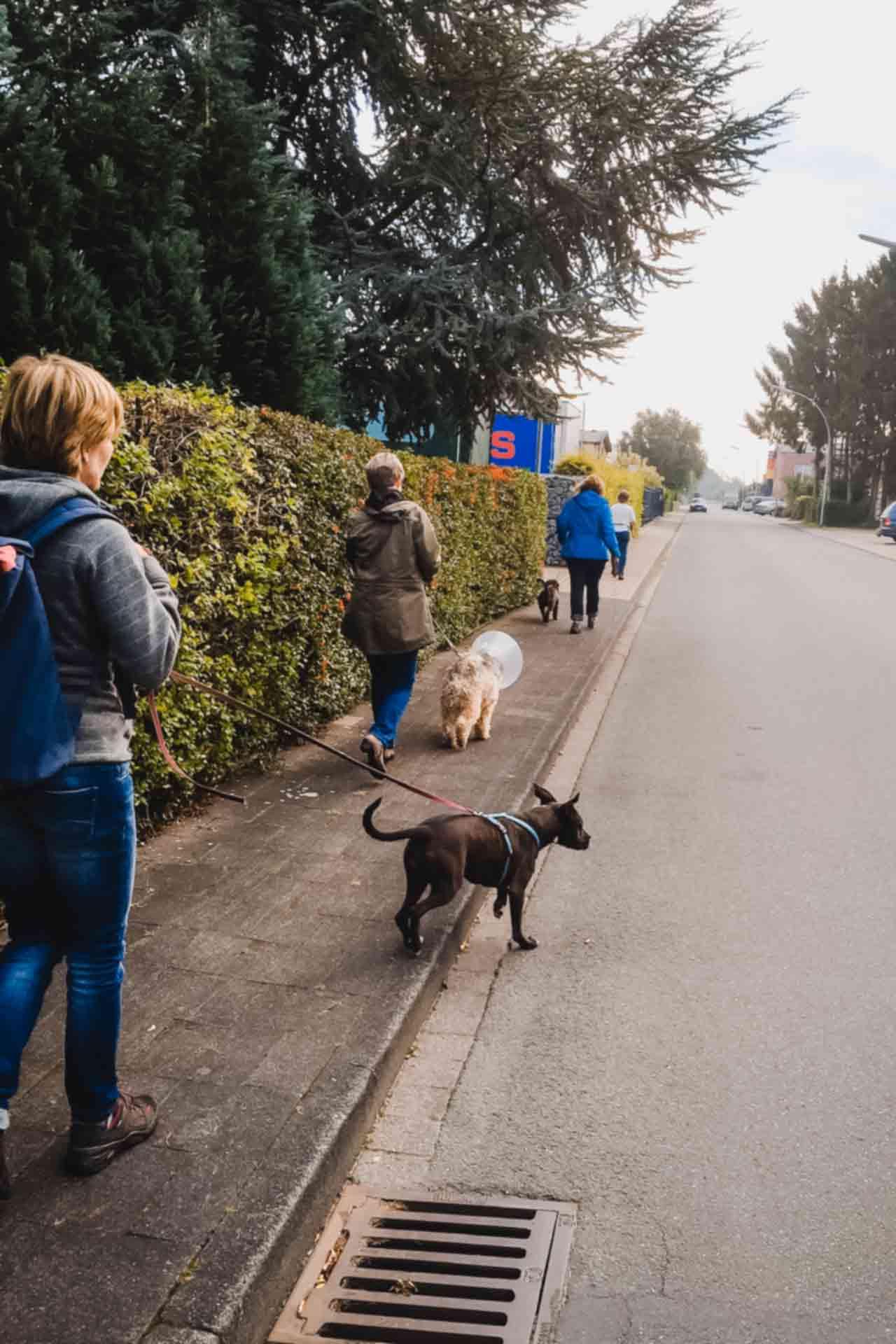 hundpunkt_hundeschule_muenster-ibbenbueren-kurs-terrain-training-hundewanderung