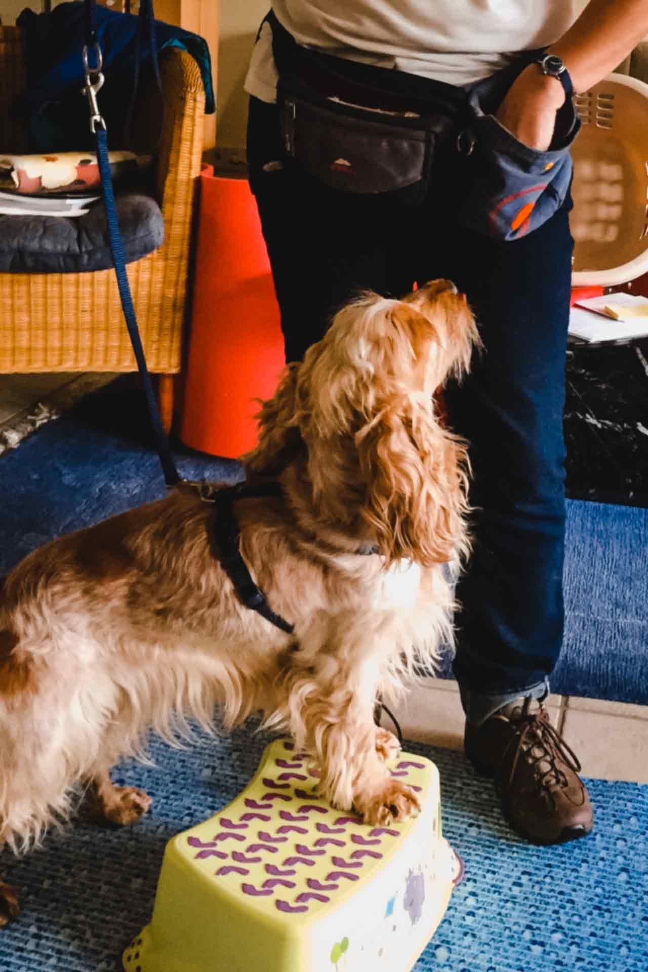 hundpunkt_hundeschule_muenster-ibbenbueren-kurs-trickklick-12