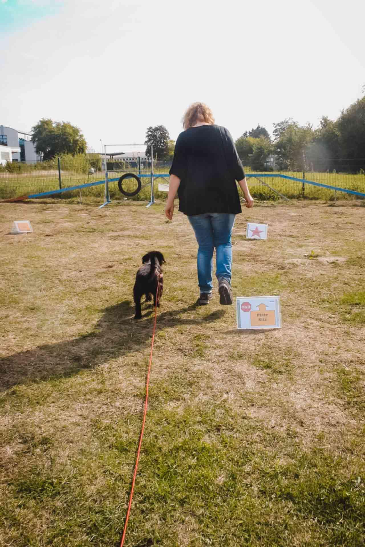 hundpunkt_hundeschule_muenster-ibbenbueren-kurse-allerlei-beschaeftigung