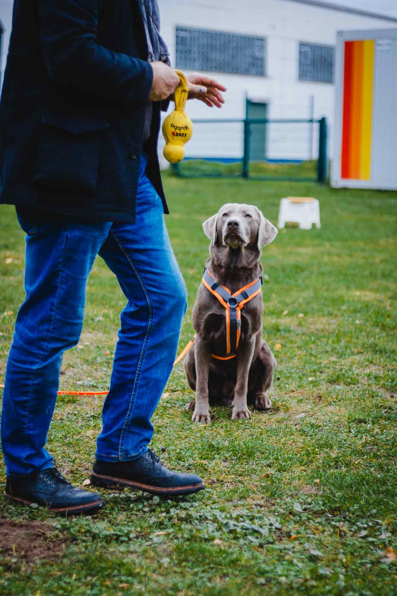 hundpunkt_hundeschule_muenster-ibbenbueren-labrador-dummytraining