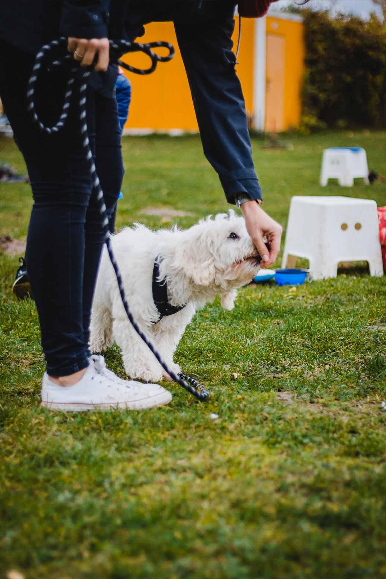 hundpunkt_hundeschule_muenster-ibbenbueren-leckerli-traing