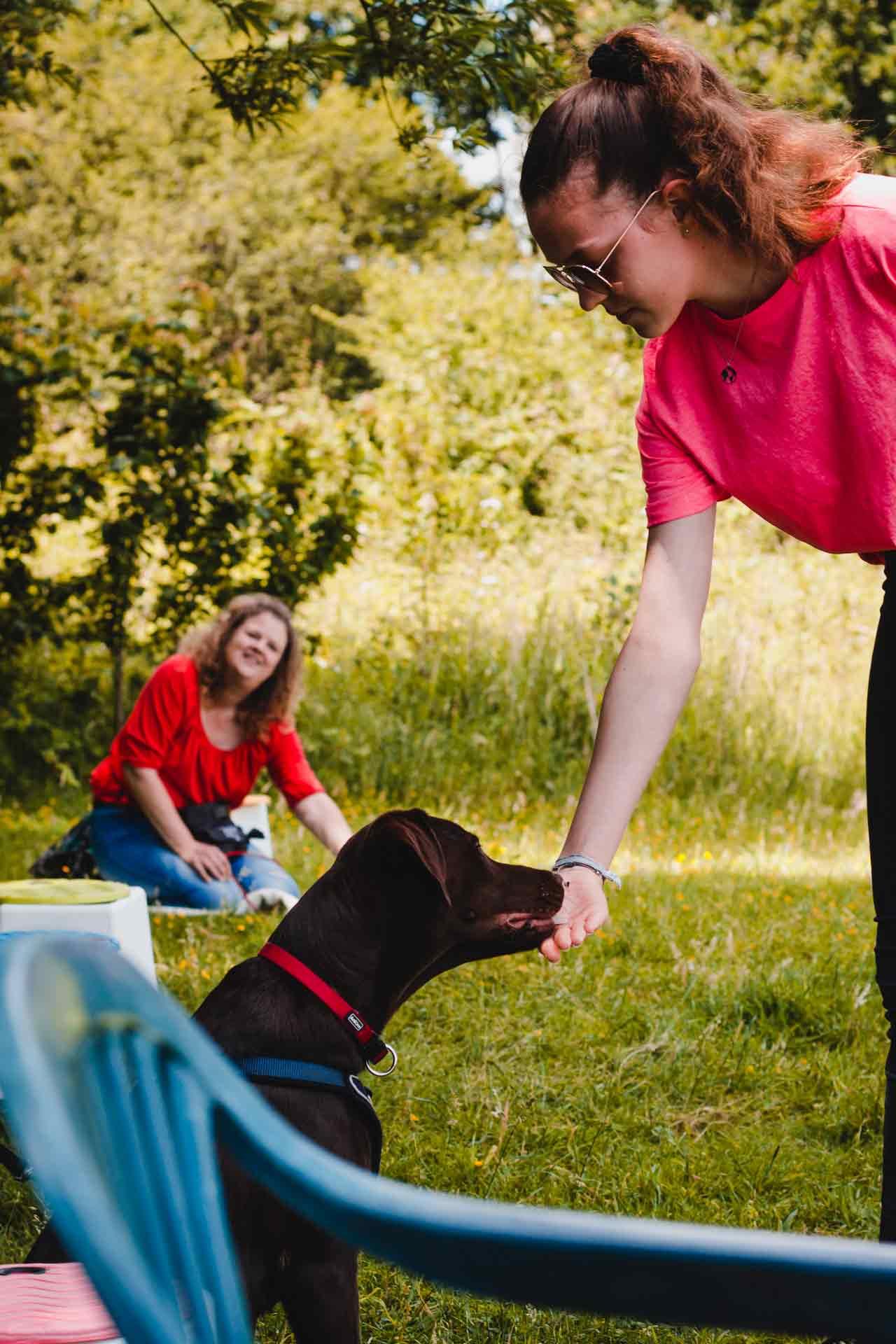 hundpunkt_hundeschule_muenster-ibbenbueren-mensch-hund-team-sonne