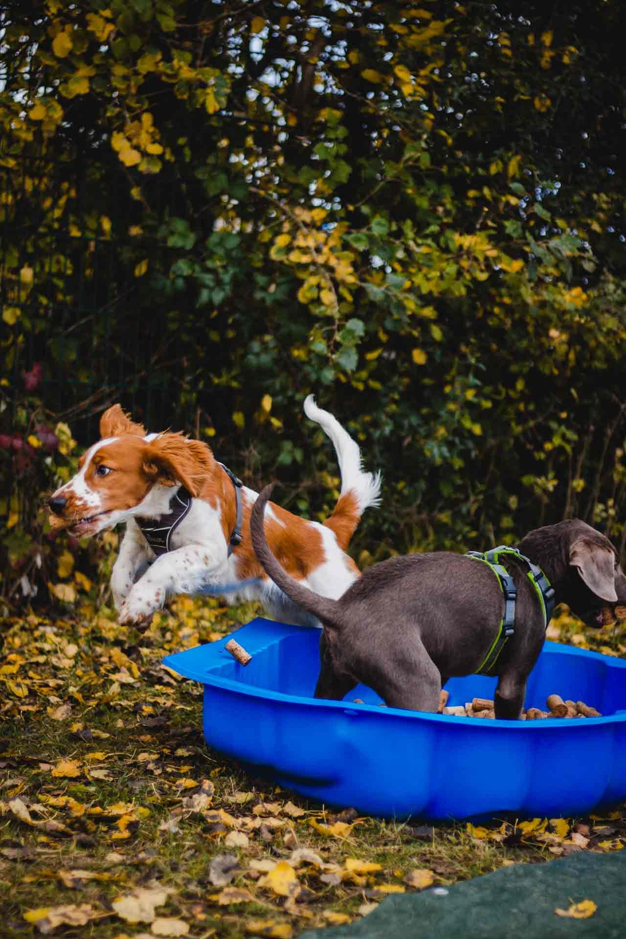 hundpunkt_hundeschule_muenster-ibbenbueren-welpentraining-junghund