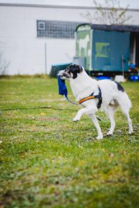 hundpunkt-hundeschule-muenster-ibbenbueren-training-kurse (1156 von 168)