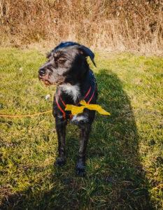 hundpunkt_hundeschule_muenster-ibbenbueren-blog-gelberhund-2