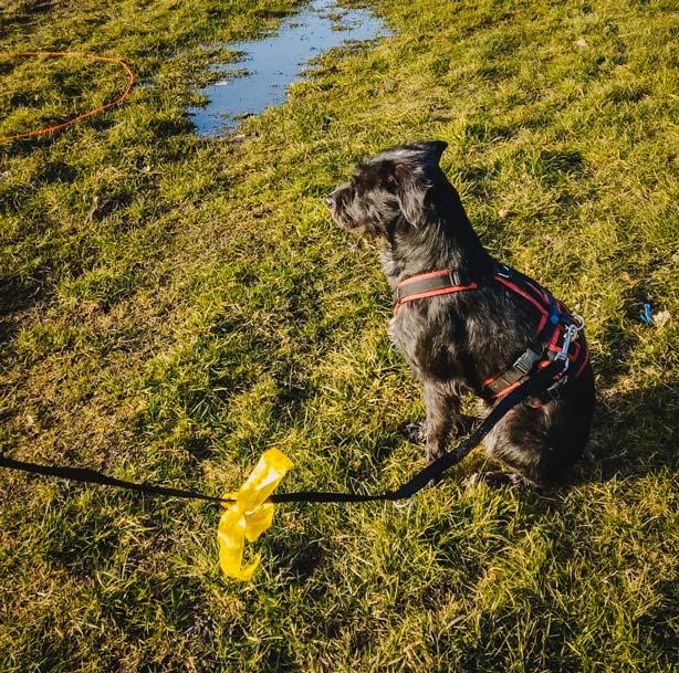 Gelber Hund – was ist´n das?