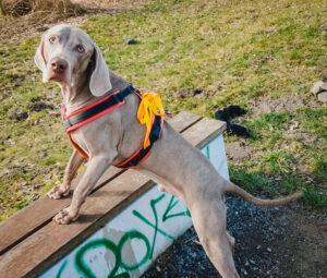 hundpunkt_hundeschule_muenster-ibbenbueren-blog-gelberhund